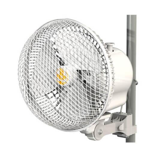Monkey Fan (med sving)